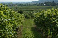 Pferschy-Seper Weine : Bio-Pioniere in der Thermenregion